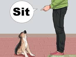 training a australian shepherd puppy 3 easy ways to train a german shepherd wikihow