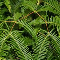 non flowering hawaiian plants u2013 hawaiian plants and tropical flowers