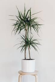 indoor trees that don t need light 10 houseplants that don t need sunlight houseplants low light