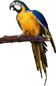 parrot png images free pictures download