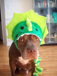 Pitbull Dog Halloween Costumes Costume Contest Pit Bulls Disguises Love Costumes