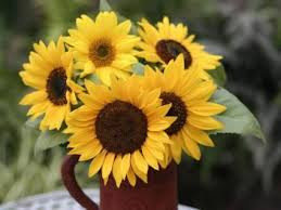 Vase Of Sunflowers Sunflower Lovetoknow