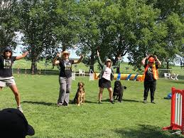 Backyard Agility Course Backyard Agility Dogs Home Facebook