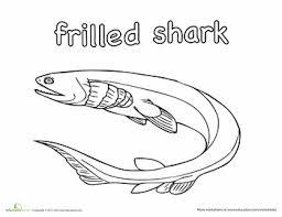 sharks coloring pages frilled shark coloring page océan u2022 u2022under the sea u2022 u2022océano