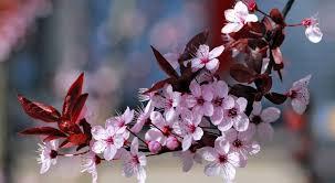 imagenes con flores azules dia de la maestra 21 flores hermosas para regalar y sorprender a una mujer