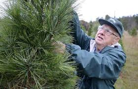 9 cut your own christmas tree farms a short drive from charlotte