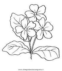 fiori disegni disegno primula 1 categoria natura da colorare