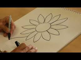 drawing from nature how to draw a daisy youtube