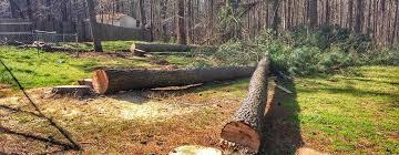home kenny s tree removal llc