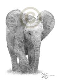 pencil sketch of baby elephant pencil drawing of a baby