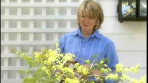 video good thing how to plant clematis on a trellis martha stewart