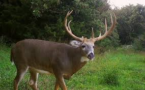 where does a buck bed top 10 spots whitetail habitat solutions