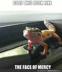 Reptile Memes - 133 best reptile memes images on pinterest ha ha funny photos