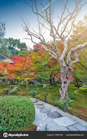 albero giardino albero di acero rosso giapponese durante l autunno in giardino al