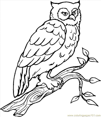 cartoon snowy owl kids coloring