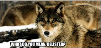 Angry Wolf Meme - monday memes angry wolf and a loquacious loon great lakes echo