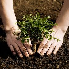 Garden Soil Types - garden soil types nutrients ph organic matter