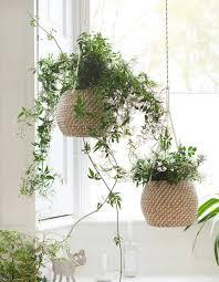 plantes dans une chambre quelle plante avoir dans la chambre