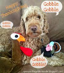 spencer the goldendoodle happy thanksgiving