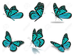 beautiful six blue monarch butterflies set isolated on white