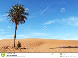 palm tree royalty free stock images image 4075049