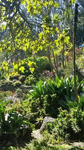 Botanical Gardens Golden Gate Park by Blog U2014 Ashley Rodriguez Reed