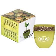 sugar apple tree kit china wholesale