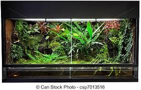 rain forest terrarium terrarium for rain forest pet animals
