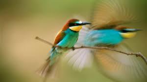 hummingbird 31637 desktop wallpapers system wallpaper
