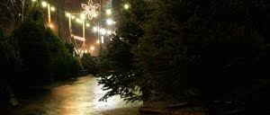 america u0027s most cutthroat christmas tree market citylab