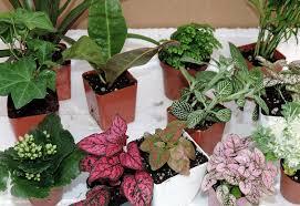 Unique Plant Pots by Amazon Com Terrarium U0026 Fairy Garden Plants 10 Plants In 2 5