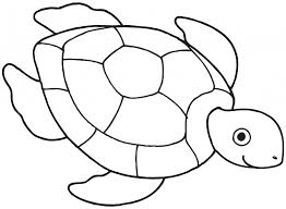 coloring dazzling turtle easy draw simple drawing 7 pics