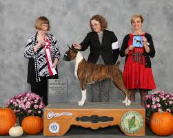 boxer dog 2015 show results october 2015