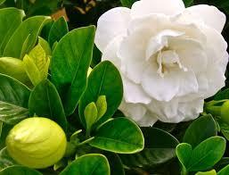 Spring Flower Pictures Best 20 Hawaii Flowers Ideas On Pinterest Tropical Beach Bum