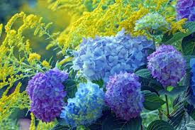 the best flowering plants for hipages au