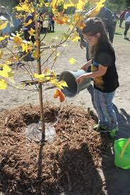 city plants on looking for tree care tips check out our