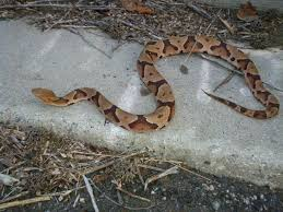 atlanta wildlife solutions llc snakes got a hold of you call