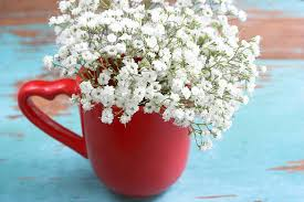 Baby Breath Flowers Baby Breath Flower Pictures Images And Stock Photos Istock
