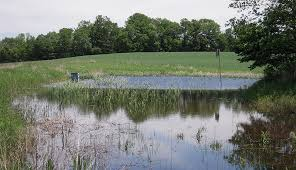 Underground Duck Blind Build A Pond With Ducks U2014and Other Wildlife U2014in Mind Hobby Farms
