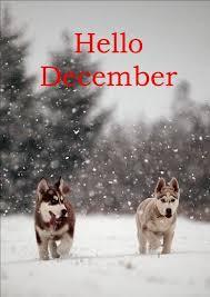 imagenes hola diciembre imágenes de hola diciembre hello december para compartir
