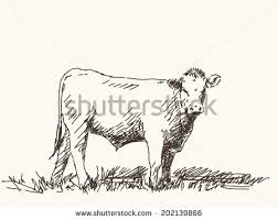animal cow sketch stock images royalty free images u0026 vectors