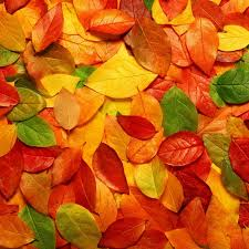 cute fall wallpapers new ipad wallpapers group 86