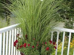 pergola trellis for plants sweet trellis for pepper plants
