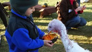dexter thanksgiving episode visit farm sanctuary or adopt a turkey this thanksgiving axs