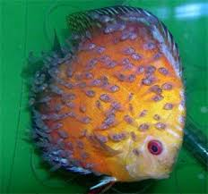 2325 best cool fish images on beautiful fish tropical