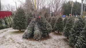artificial tree sales walmart fundraiser