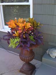 Summer Container Garden Ideas Simple Summer Container Mix Of Croton Setcreasea And Lime Potato