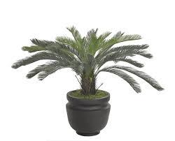 Plant Potters by Cycas Palm Floor Plant Green Potter U0027s Jar Matte Black Planter
