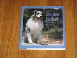 beagle x australian shepherd australian shepherd kijiji in alberta buy sell u0026 save with