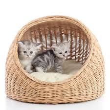 5 kinds of cat beds your cat will love